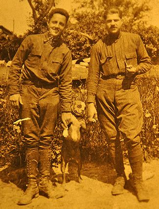 Sgt Stubby Story The Most Decorated Earth In Transition