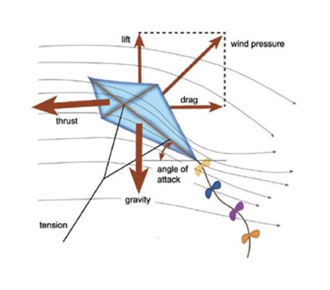 How Kites Fly   National Air and Space Museum Delta Kite Diagram
