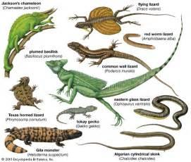 draco lizard genus britannica com