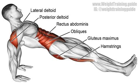 plank exercise diagram high plank an isolation push exercise muscles