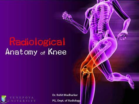 Knee Anatomy Authorstream Bone Powerpoint Template
