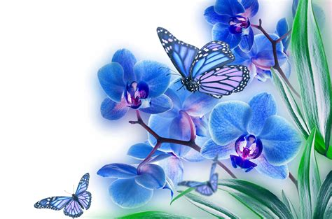 15 spectacular butterfly on flower images hd