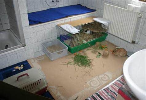 kaninchen in wohnung pin kaninchen in wohnung freilaufend on