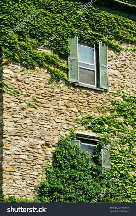 ivy and stone home on instagram ivy growing on stone house stock photo 38919067 shutterstock
