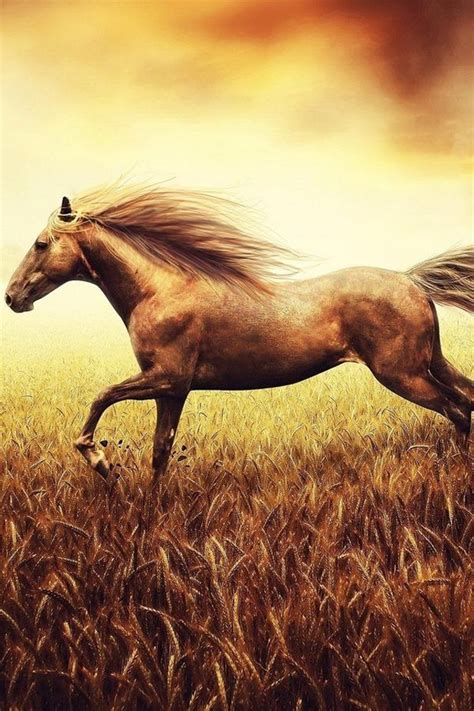 wallpaper iphone 6 horse 20 cute baby animal pictures download free iphone wallpapers