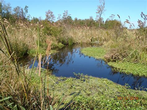 projects land management group wilmington nc
