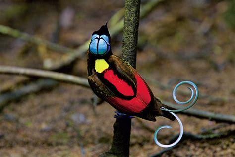 extreme birds the world s most extraordinary and bizarre birds ebook coffee shoppe wsjournal how to impress a bird even