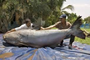 5 Meters To Feet 9 of the world s biggest animals oddee