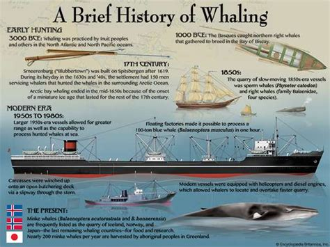 boat definition in history whaling definition history facts britannica