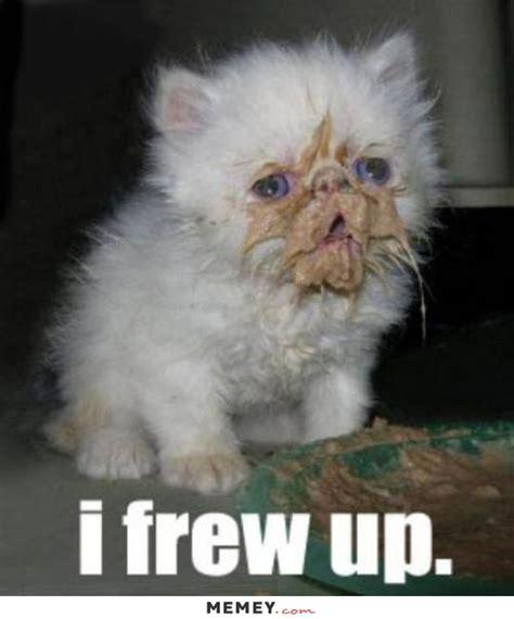Vomit Meme - kitten memes funny kitten pictures memey com