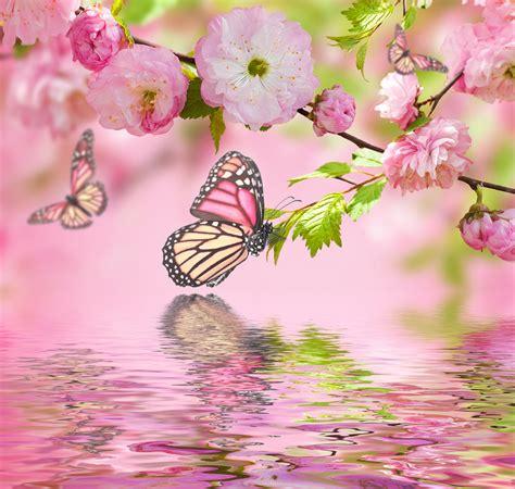 imagenes de mariposas color rosa banco de im 193 genes 12 im 225 genes de paisajes aves flores