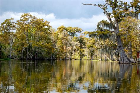 on the bayou bayou images search