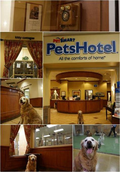 puppy playtime petsmart your pet s invited to petsmart petshotel social
