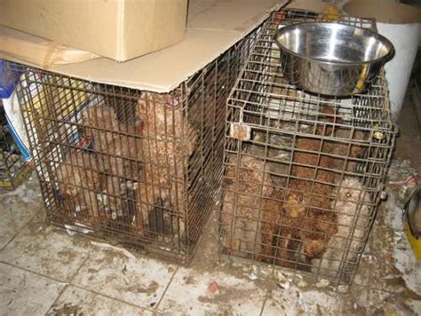 define puppy mill president obama to respond to anti puppy mill petition dogtime