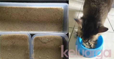 Sho Kucing Paling Murah kos murah dan paling senang nak buat rupanya begini cara