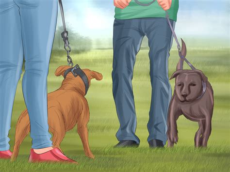 ways   care   pitbull puppy wikihow