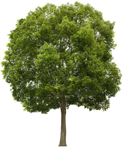 tree pictures tree png png 1903 215 2304 photoshop garden