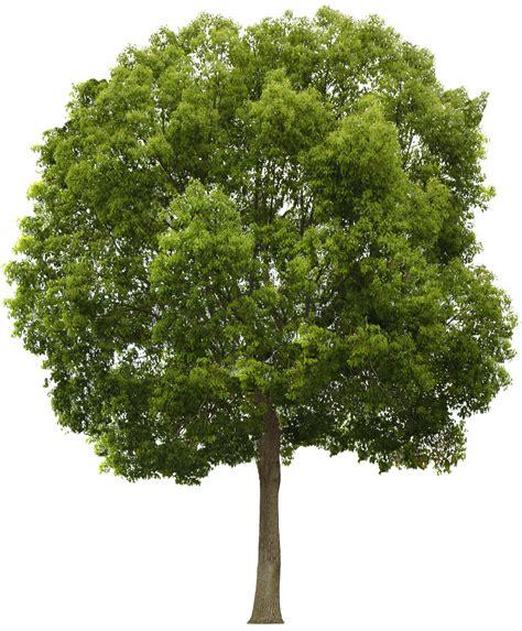 Download Tree Png HQ PNG Image | FreePNGImg