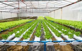 5 nutrient technique tanaman hidroponik 2018