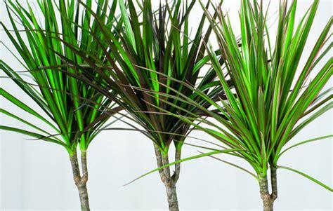 37 house plants for terrariums realestate au