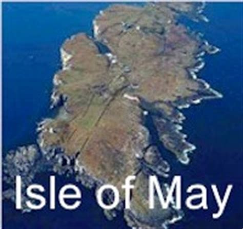isle of may boat trips north berwick seafari edinburgh seafari adventures forth