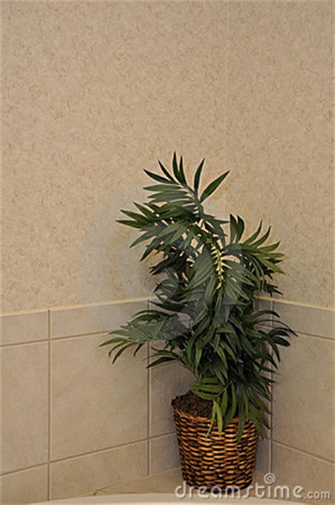artificial bathroom plants artificial plant in modern bathroom royalty free stock photo image 20913915