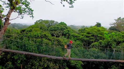 canopy amazon 100 canopy amazon explornapo lodge down the amazon
