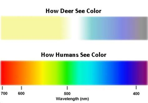 what colors can deer see how deer view the world jim collyer