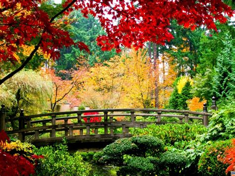 autumn nature bridge wood trees leaves red green yellow