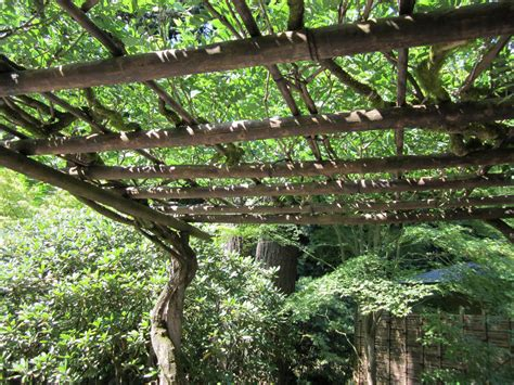 Search Japanese Wysteria Arbor On Japanese Gardens Arbors And Wisteria Arbor