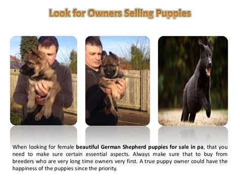 german shepherd puppies for sale in pa cheap german shepherd puppies for sale in pa with or care