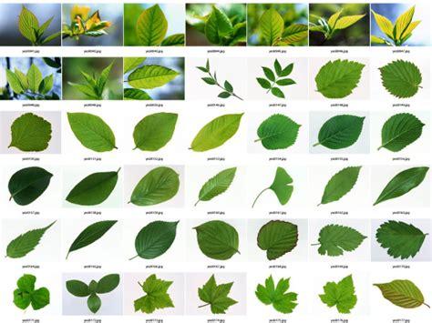 Wedding Album Leaf by Leaf Hd Photo Album 1 Free
