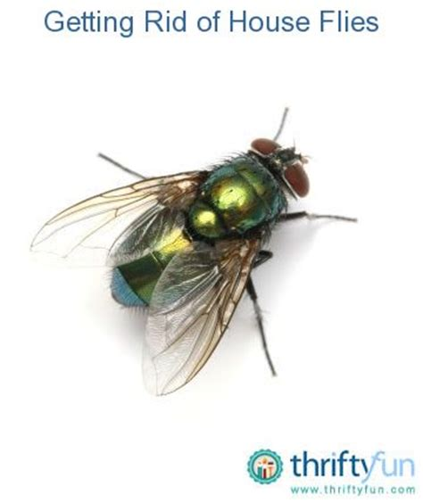 Get Rid Of Flies On Patio by 17 Best Images About House Fly Problem On