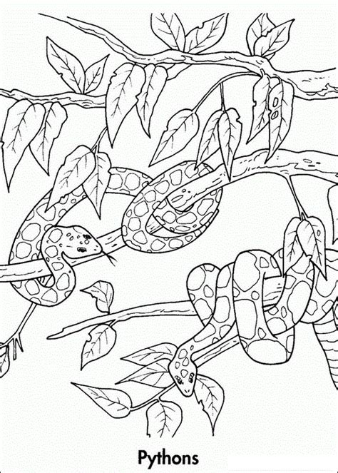 free coloring pages of amazon rainforest animals