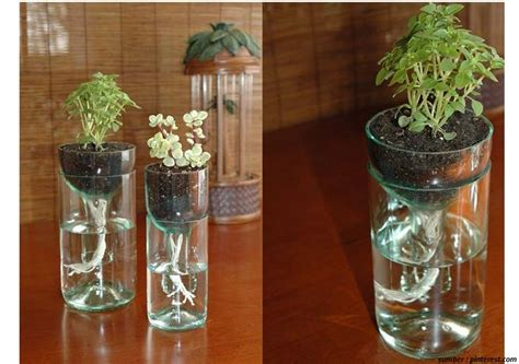 membuat hidroponik botol cara praktis membuat hidroponik wick system dari botol