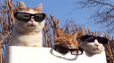Kuas Cat 3in のせ猫 x サングラス3つ cat wear glasses 2014 2