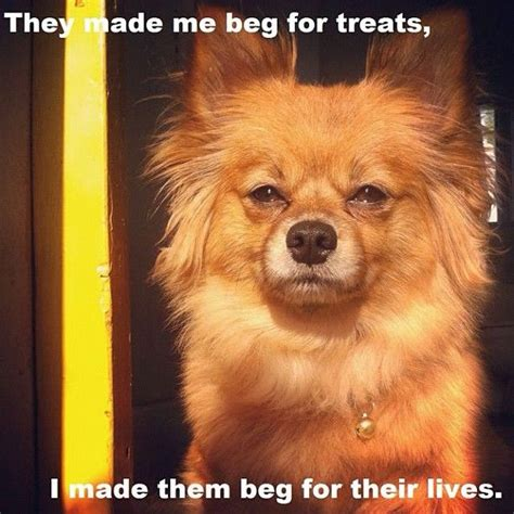 Serious Dog Meme - 22 best dogs memes images on pinterest funny animals