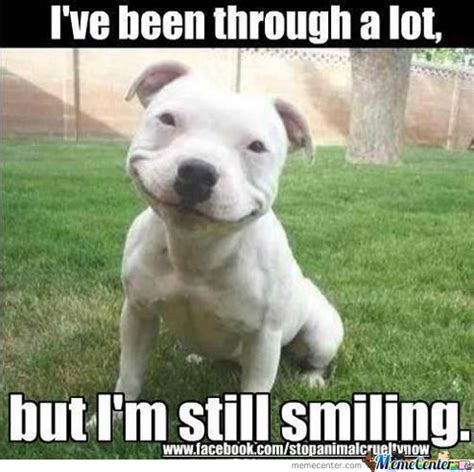Smiling Dog Meme - 75 most funniest smile pictures