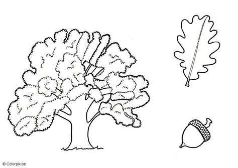 oak tree coloring page coloring home