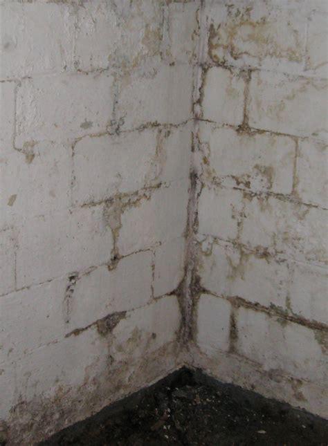 mold in basements mold
