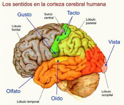 imagenes visuales sinestesia la felicidad fisica de dios la mente es un subproducto