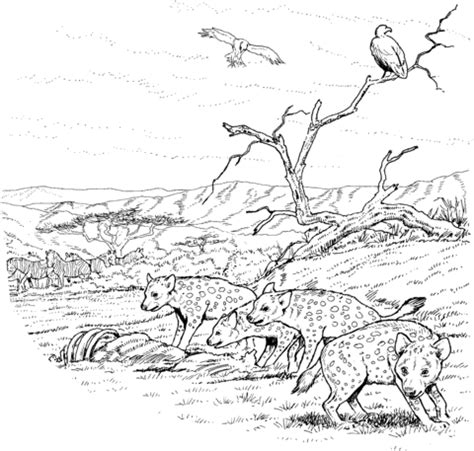 baby hyena coloring pages 301 moved permanently