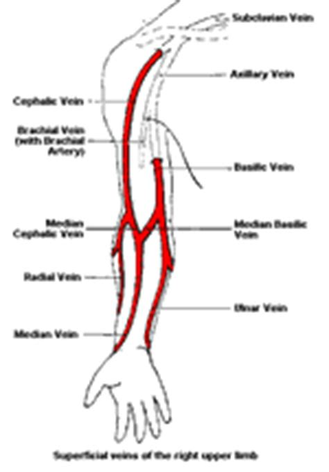 medword medical transcription human anatomy learn  digital dictation buy wavpedal