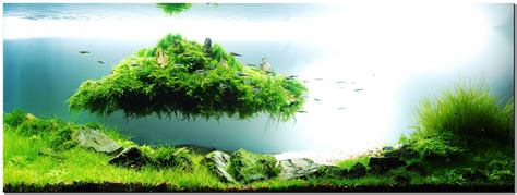 Amano Aquascape by Takashi Amano Joe Blogs