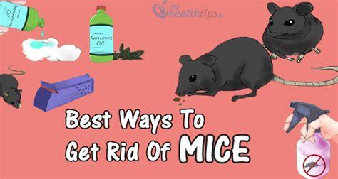 طرق طبيعية من أجل التخلص من الفئران من المنزل الطبيب
