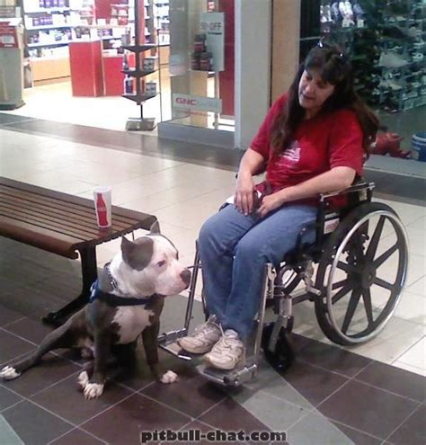 how to a pitbull to be a service 17 best images about pit bull service dogs on patriots therapy dogs and