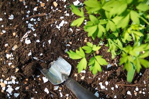 Eggshells Garden by 10 Vegetable Garden Tips You Need To Right Now