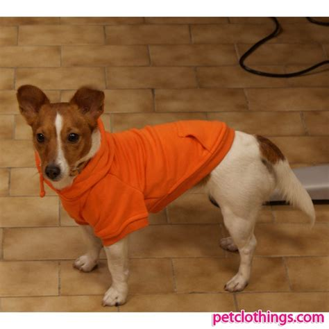 dogs and oranges bright orange sweatshirt soft and warm clothings for dogs with kangaroo pocket