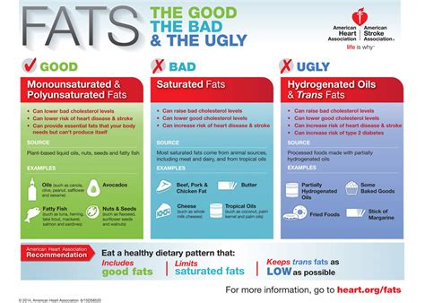 healthy fats list the about fats comprehensive review on dietary