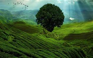 green landscape wallpaper 42260